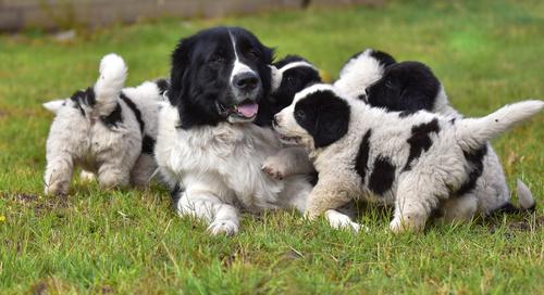 Proteggere il cucciolo