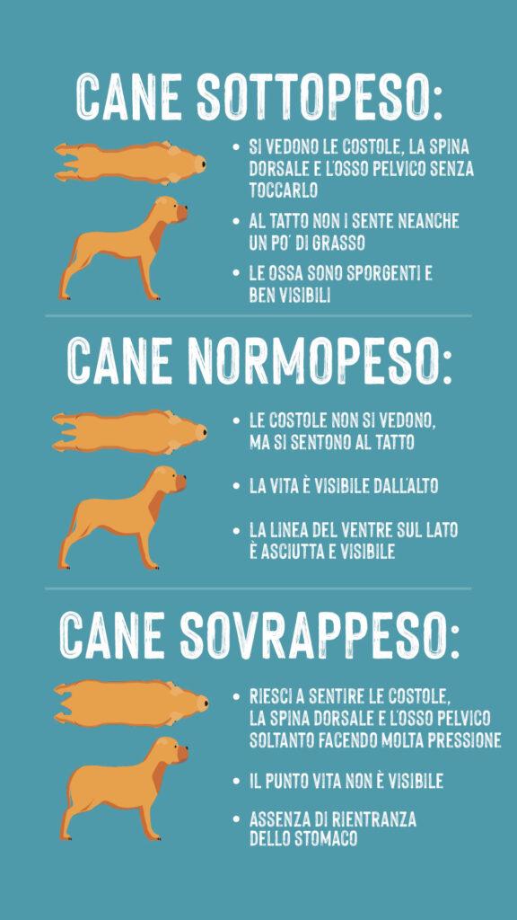 cane in sovrappeso infografica