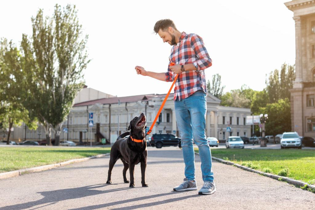 Educare il cucciolo al guinzaglio