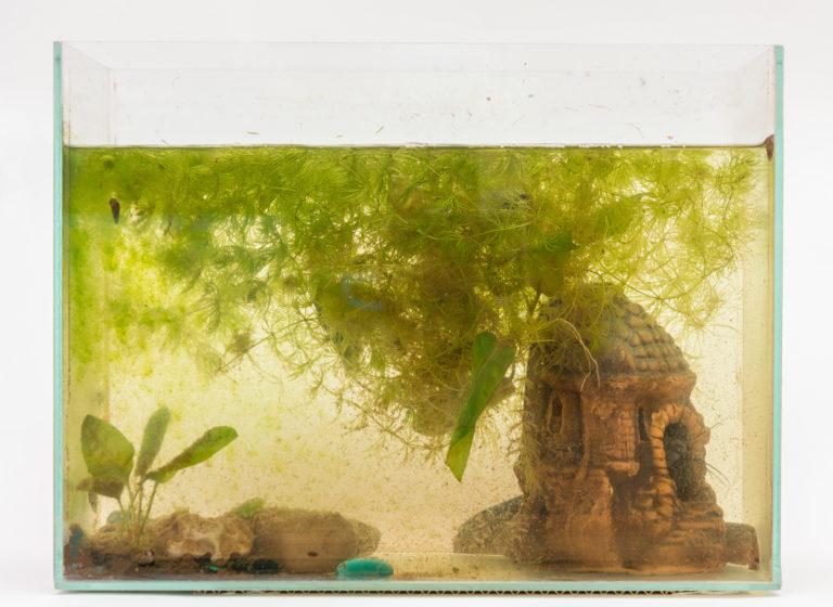 Risolvere il problema delle alghe verdi