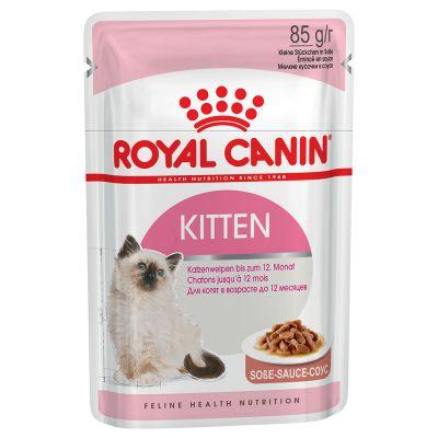 alimentazione dei gattini