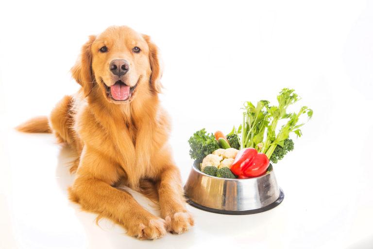 Alimentazione vegetariana per cani