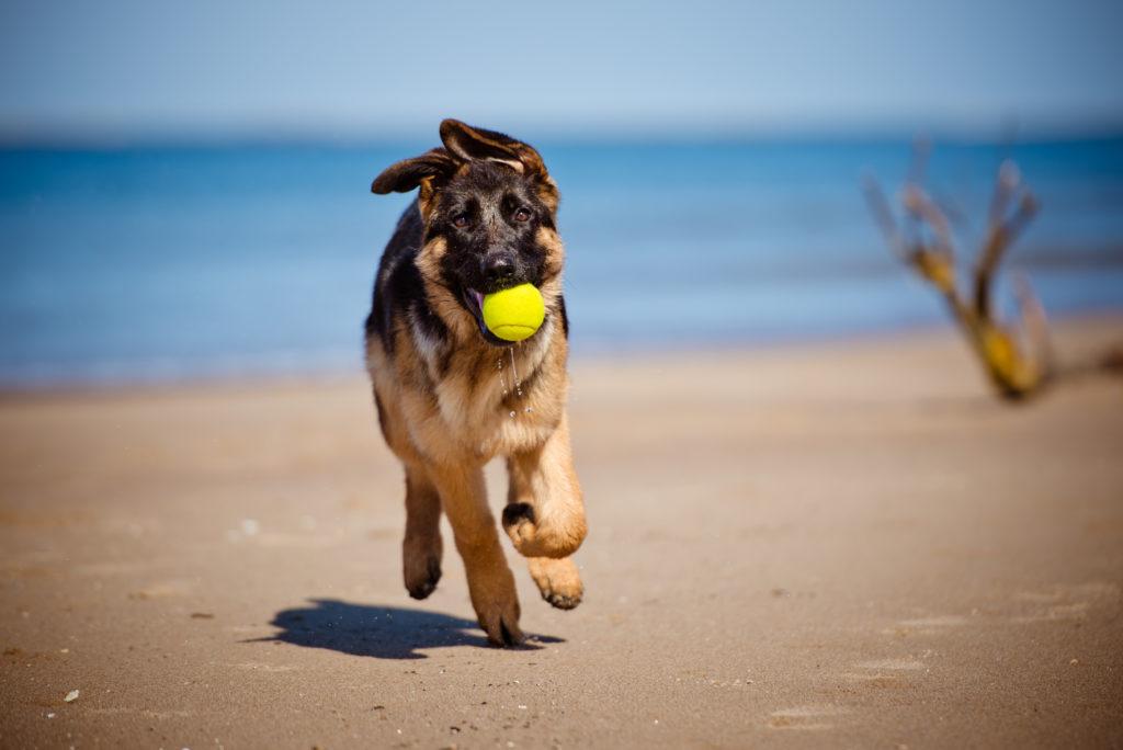 Spiagge dog friendly in Italia