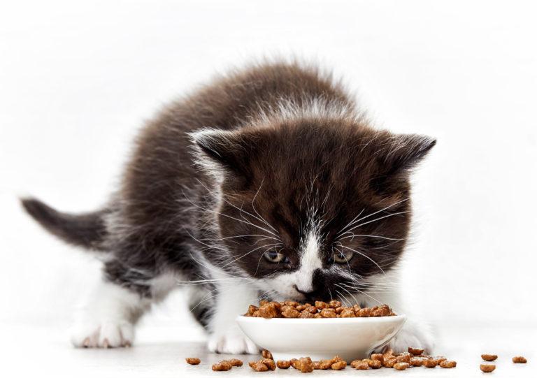 L'alimentazione dei gattini