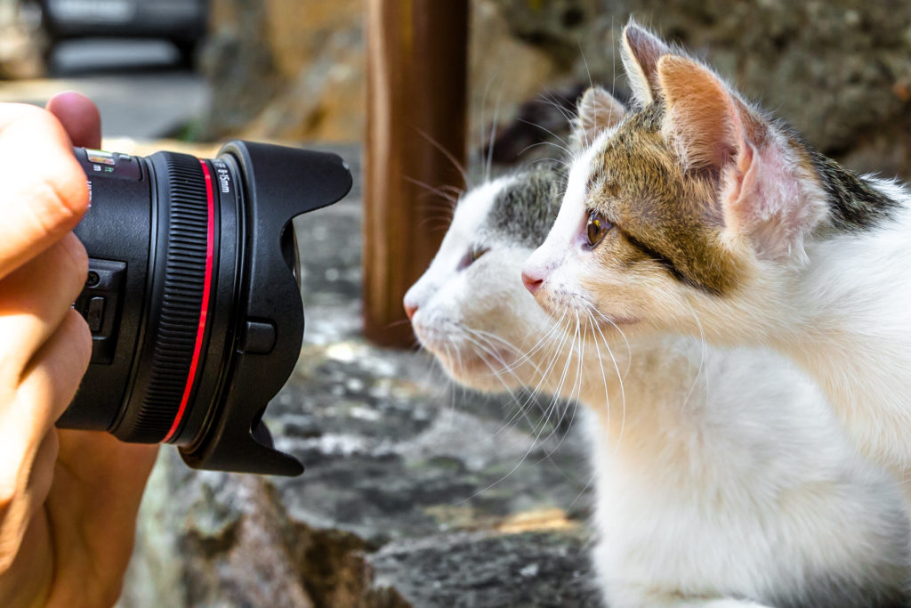 consigli per fare foto ancora più belle al tuo gatto
