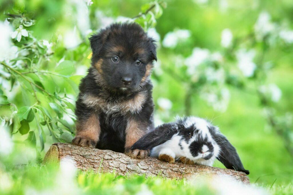 cucciolo cane insieme a coniglio