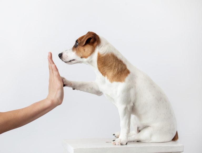La socializzazione del cucciolo