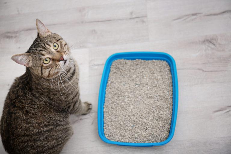 Scegliere la lettiera per il gatto