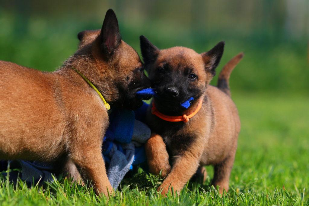Scuola per cuccioli