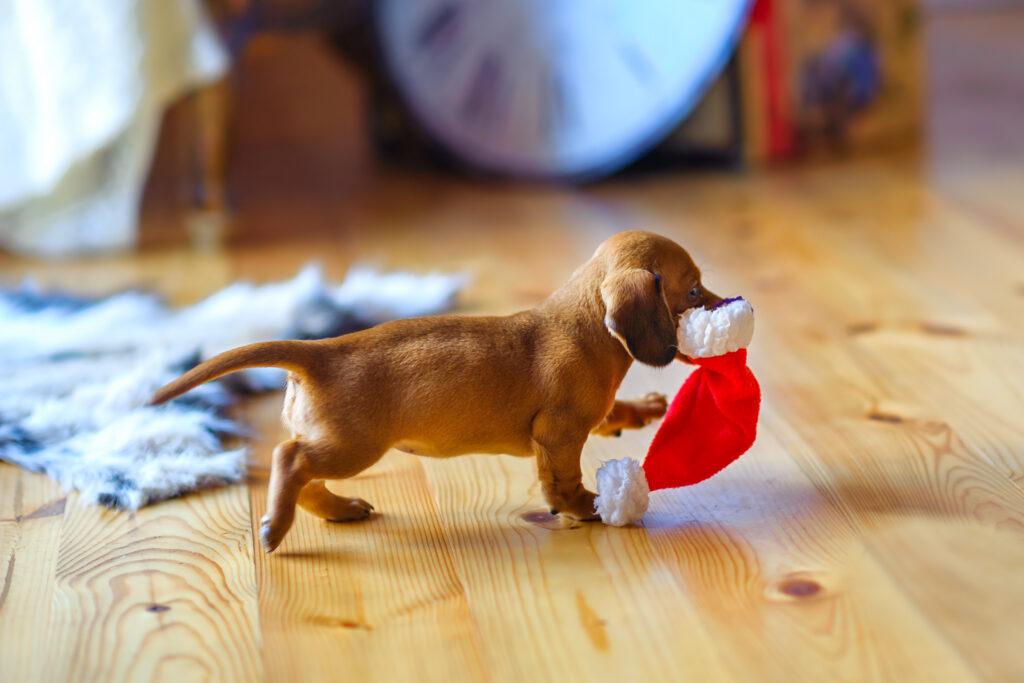Taka puppy christmas present
