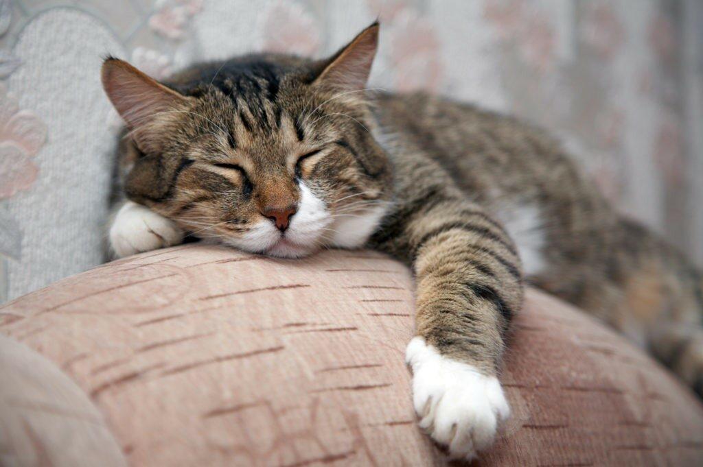 Gatto dormendo
