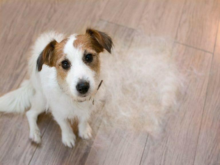 cause dei cani di infezione della pelle batterica