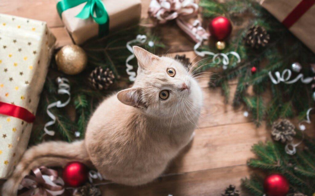 Gatto Natale 2