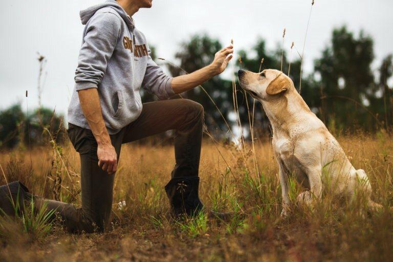cane campo