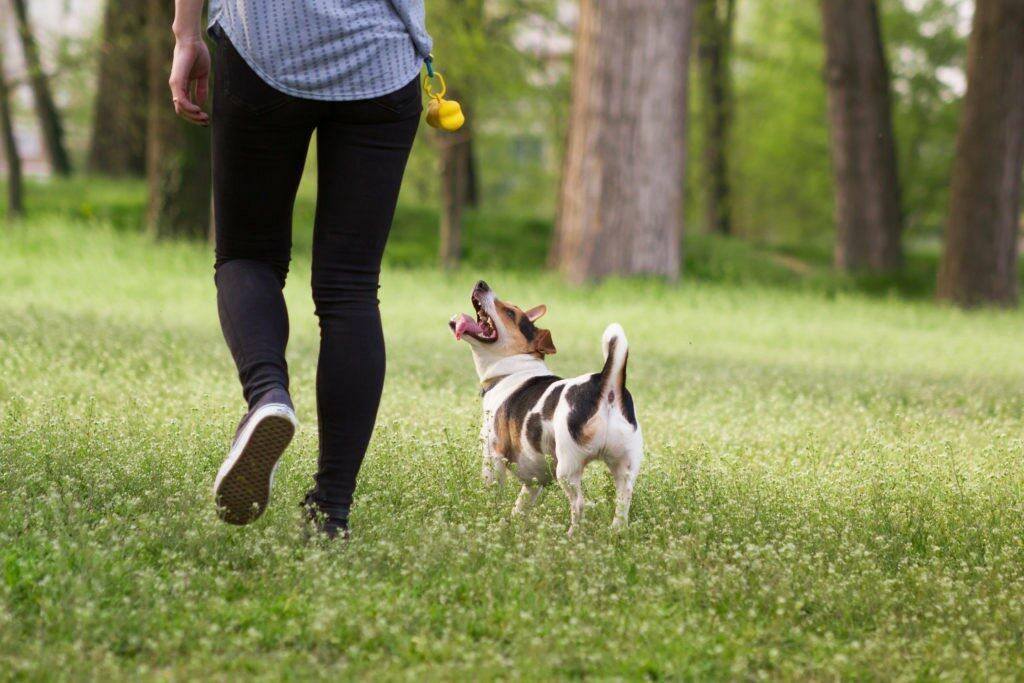 cane passeggiando