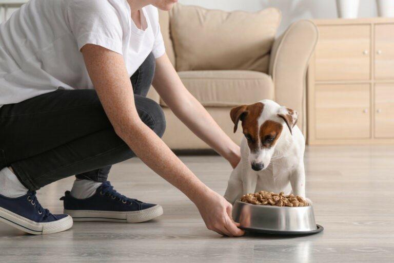 alimentazione del cane malato