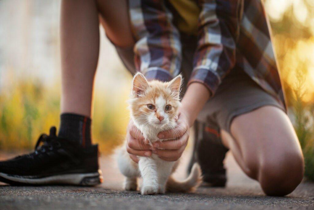 gattino 2