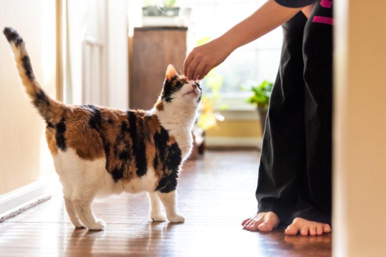 addestrare gatto con clicker