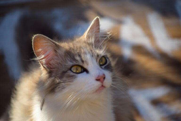 olio di cocco per gatti