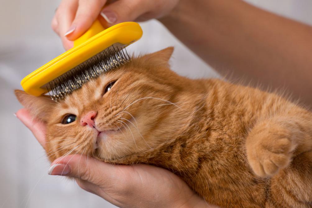Gatto spazzola