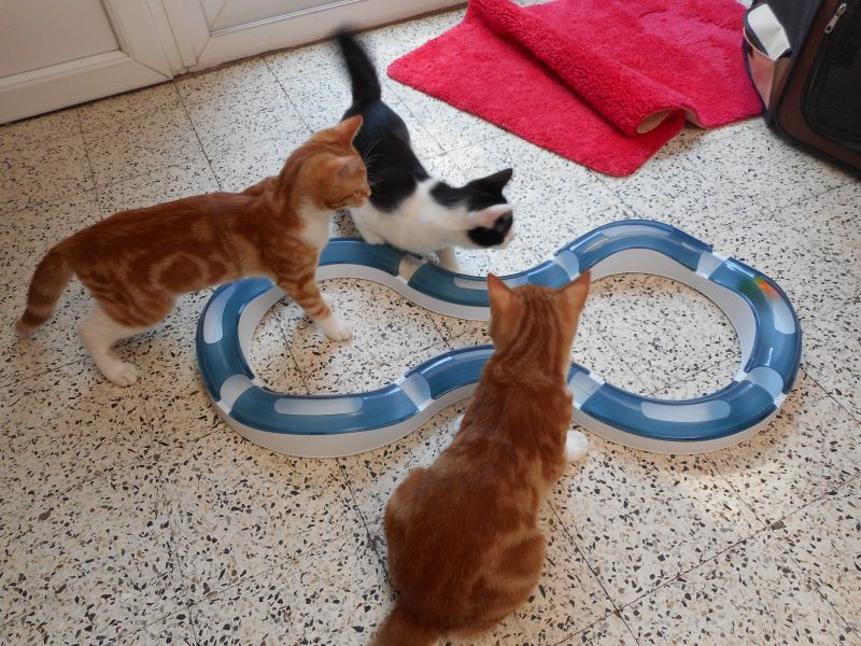 Gatti giocando