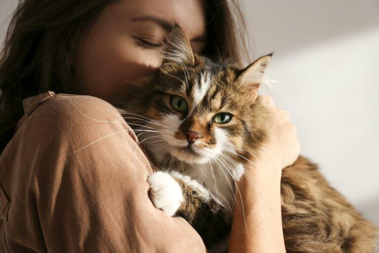 Adozione gatto