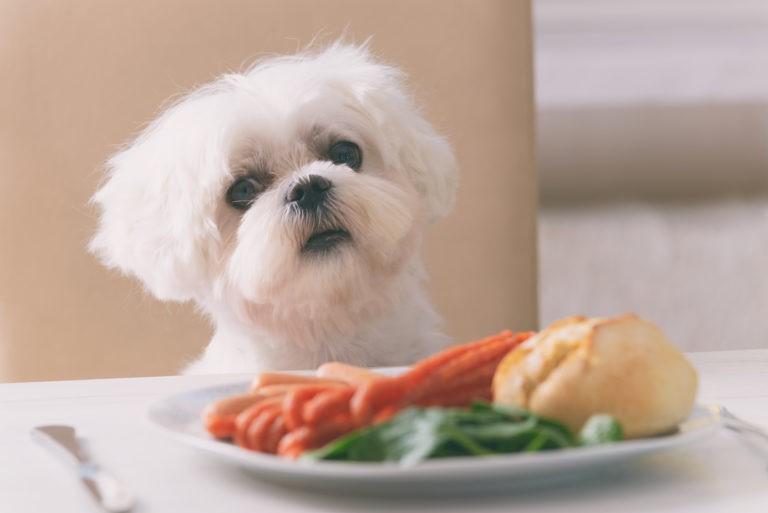 cibi tossici per cani
