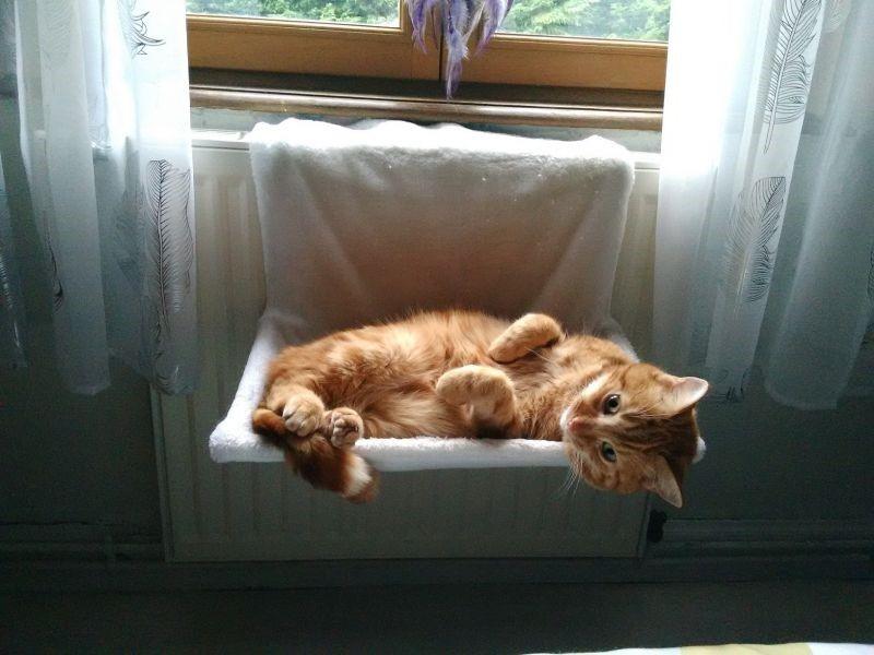 gatto termosifone