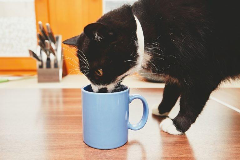 Gatto mangiando