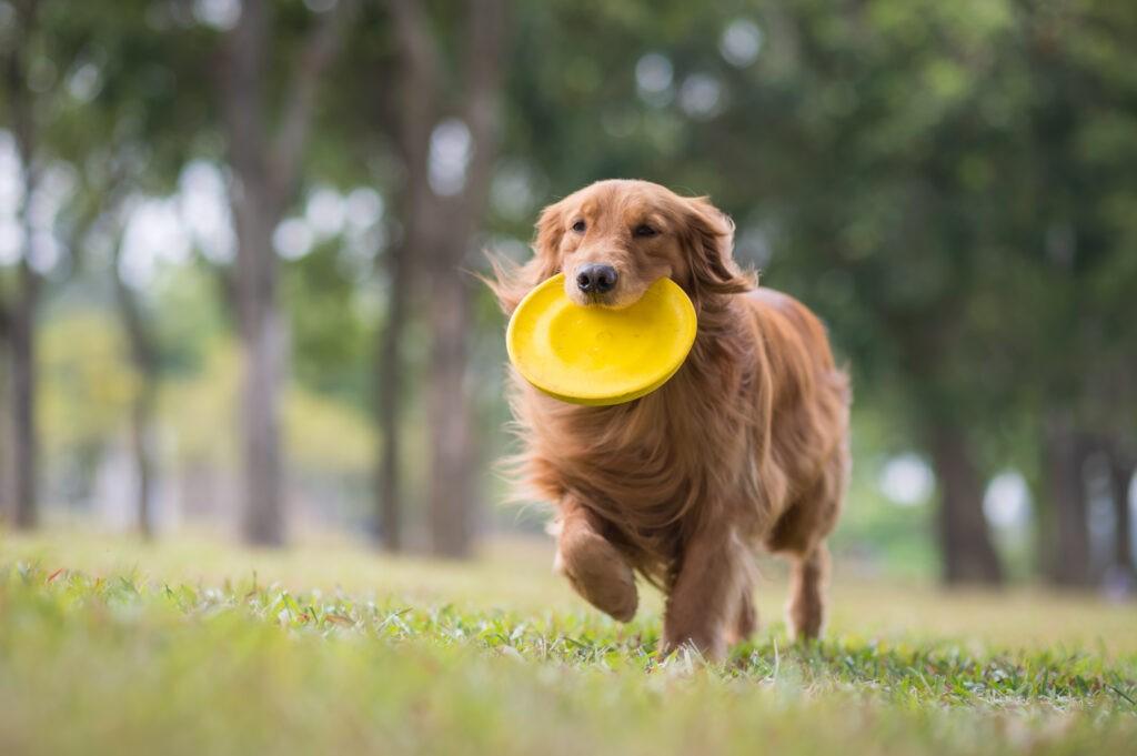 Cane frisbee