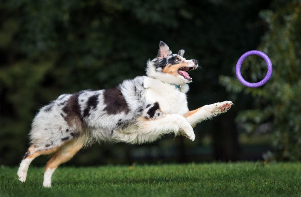 Cane giocando
