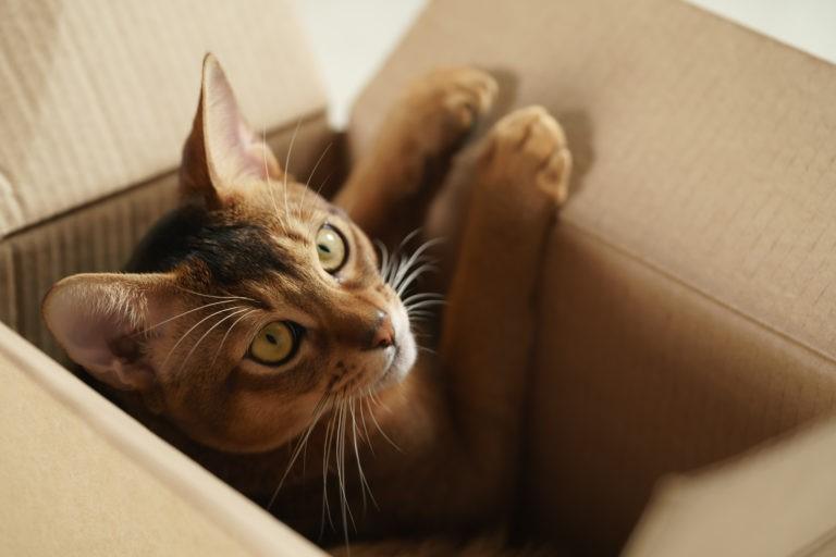 traslocare con il gatto