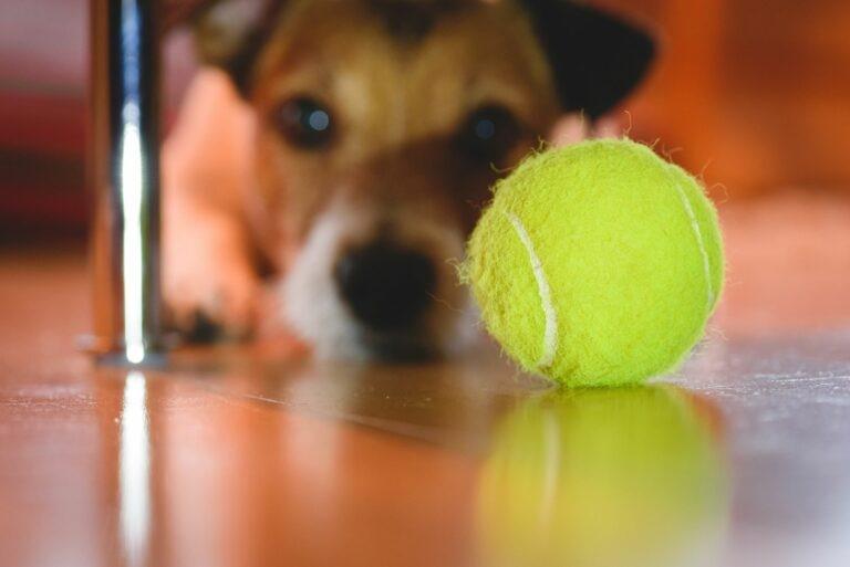 palle da tennis