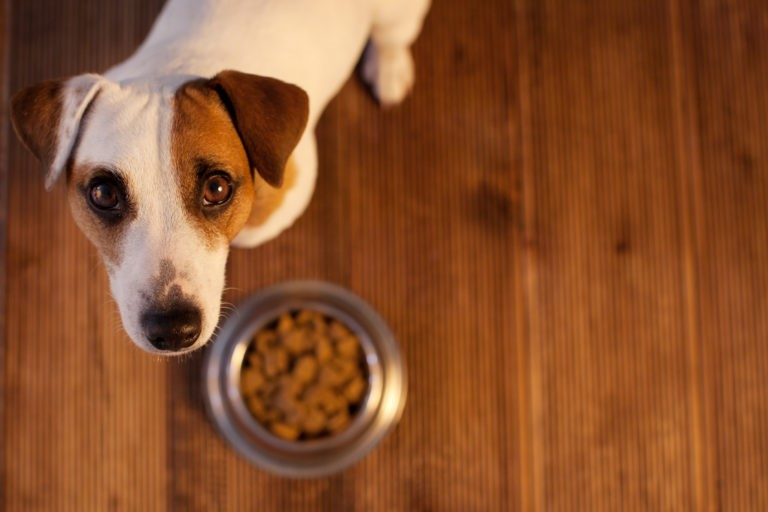 alimenti ipoallergenici per cani