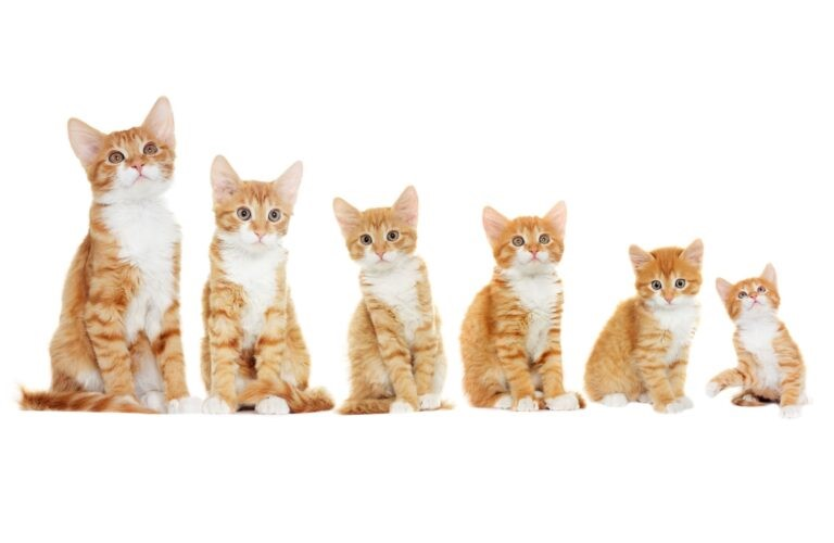 fasi crescita del gatto