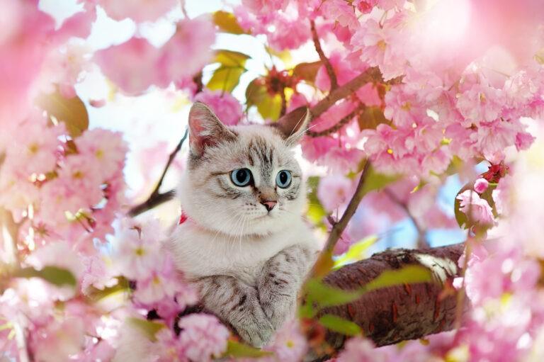 fiori di bach per gatti