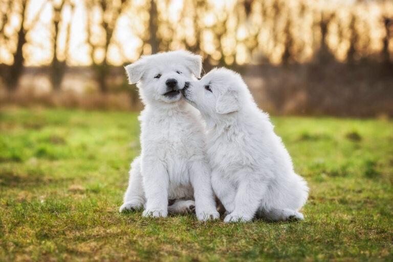 adozione del cane