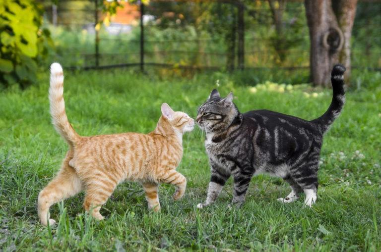 inserimento nuovo gatto