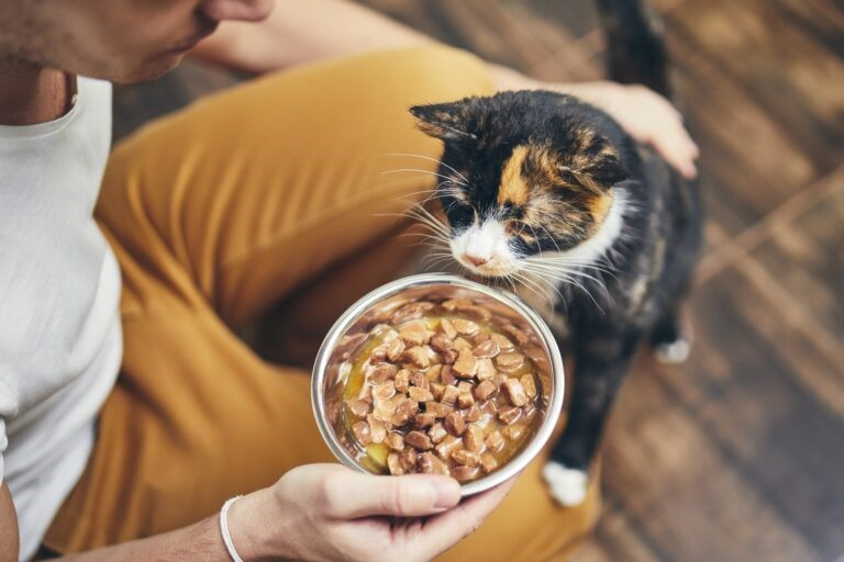 anoressia felina