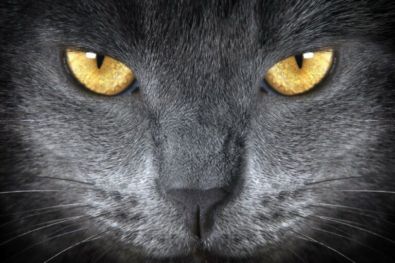 che cosa vedono i gatti