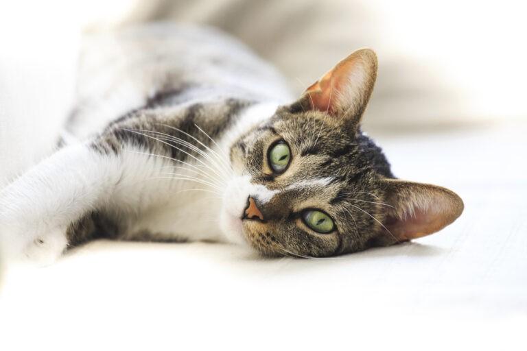 le allergie nel gatto