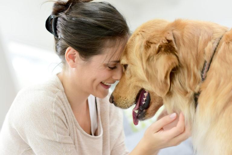 cosa sapere prima di adottare un cane