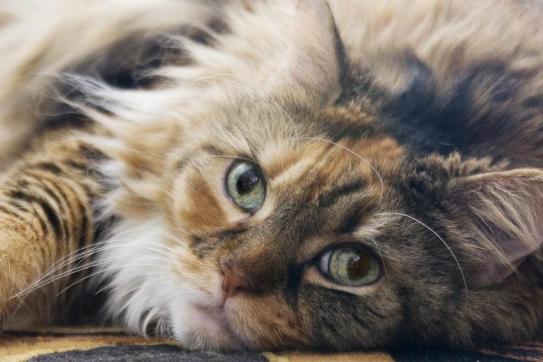 consigli per allevamento gatti