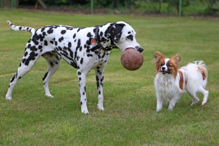 adottare un secondo cane