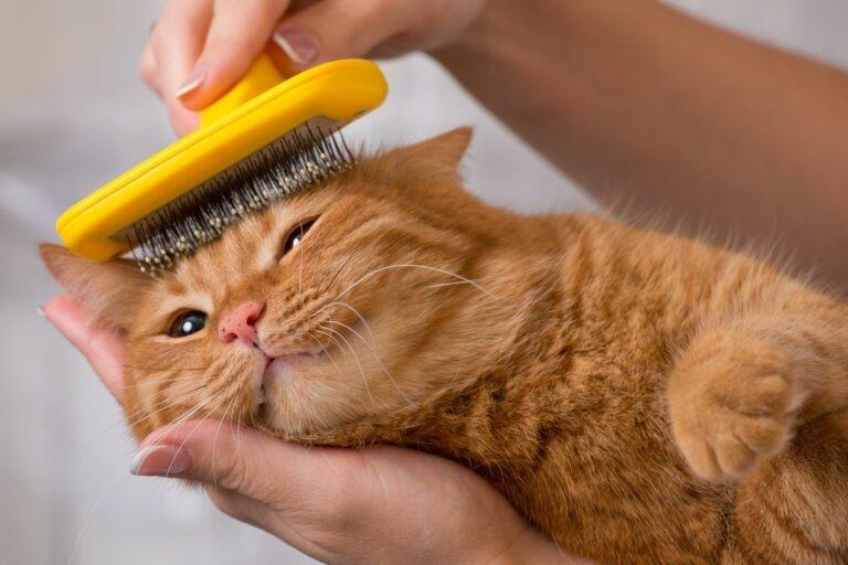 curare il pelo del gatto