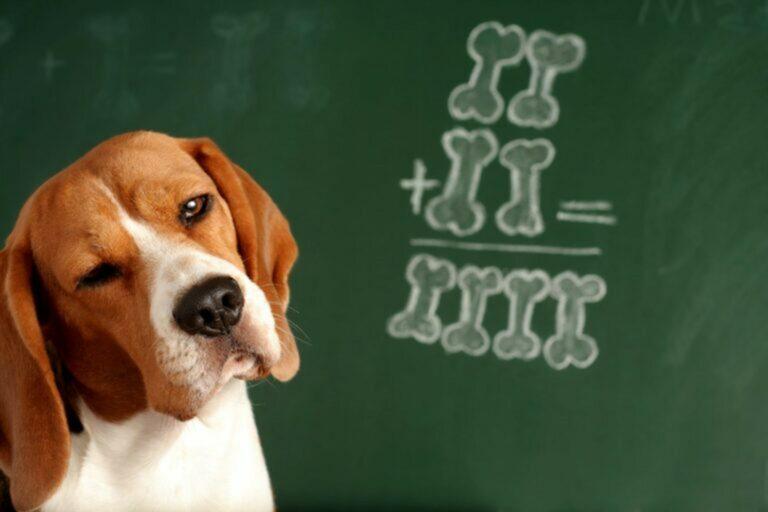 quanto capiscono i cani