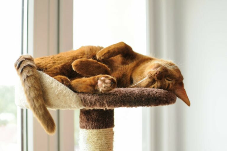allevare gatti