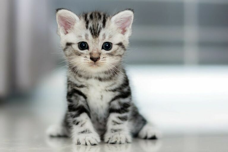il peso del gattino