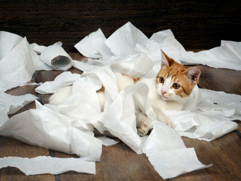 Gatto nella carta igienica
