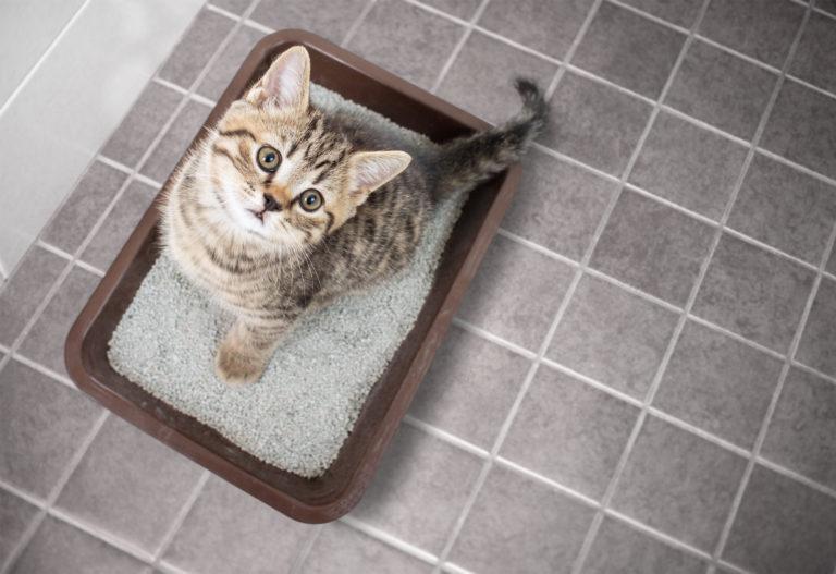 la diarrea nel gattino